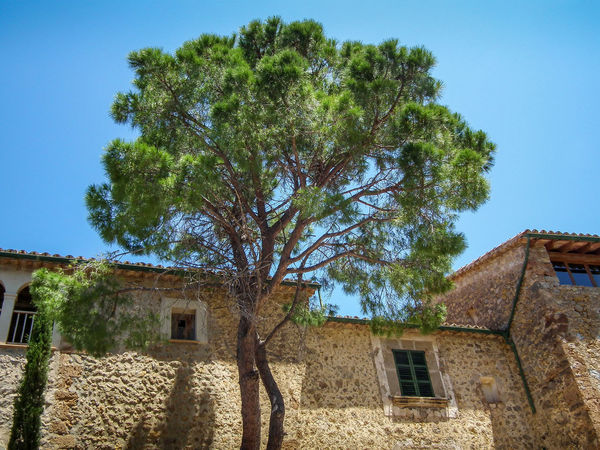 Architecture Building Exterior Built Structure Day DEIA Estate Growth Low Angle View Maiorca Mallorca No People Outdoors Sky Sommer Spagna SPAIN Spanien Summer Tree