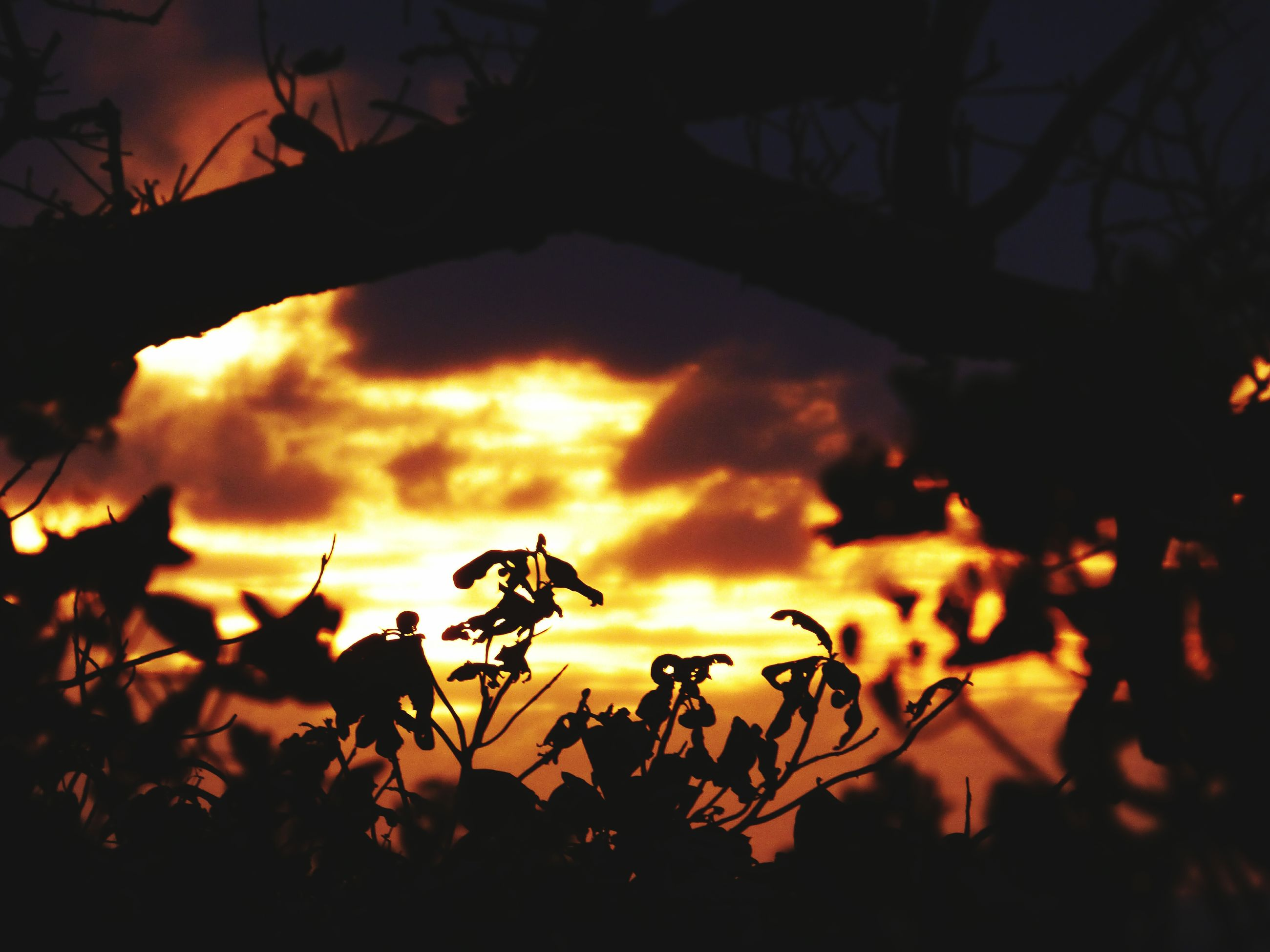 sunset, silhouette, sky, branch, orange color, nature, beauty in nature, plant, growth, tranquility, tree, cloud - sky, low angle view, sun, focus on foreground, dusk, scenics, close-up, tranquil scene, outdoors
