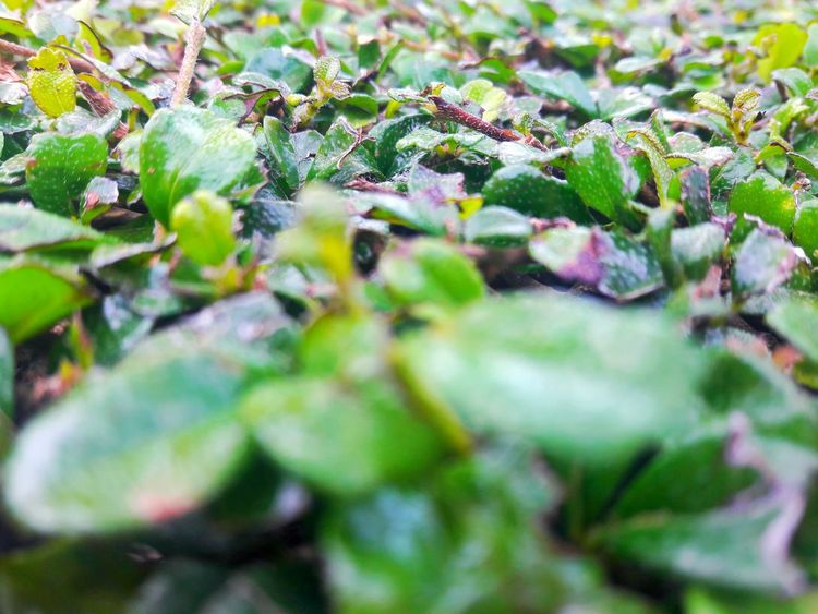 Green leafs. Life Green Garben Abstract Freshness Leaf Nature Green Color Growth Selective Focus Plant Outdoors Close-up No People Day Beauty In Nature
