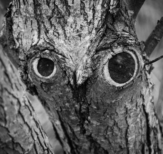 I see an owl in this tree, what do you see? Nature_collection Owl Owl In The Trees Do You See What I See? Imagination Faces In Places Faces In Nature Faces In Things Bird Face Bird In A Tree My Imagination Blackandwhite Black And White Nature Trees Faces Of The World Lincolnshire Cannon 70d