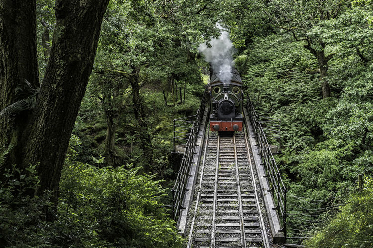 Steam train moving on railroad track amidst trees