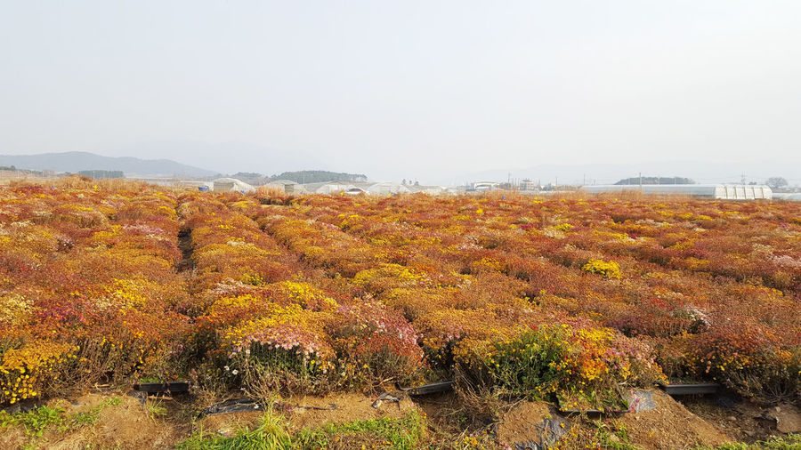 Thank you! Agriculture Autumn Autumn Collection Beauty In Nature Change Day Environment Fall Field Growth Land Landscape Nature No People Non-urban Scene Outdoors Plant Scenics - Nature Sky Tranquil Scene Tranquility Tree Winemaking Yellow Color