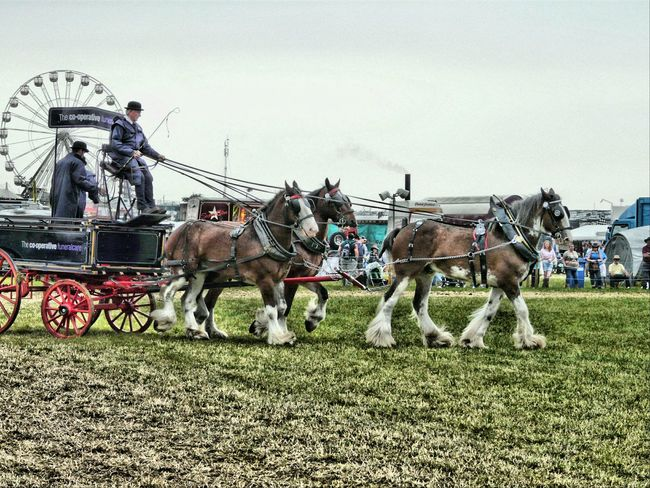 Shire Horses Transportation Relaxing Taking Photos Great Dorset Steam Fair Nature Great Day Out Animals
