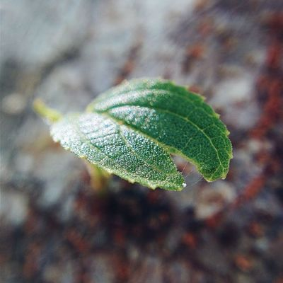 All big things has small beginnings. Vscocam Vscogrid Vscord Macro Huntingplants Nature Leaf Macrophoneography
