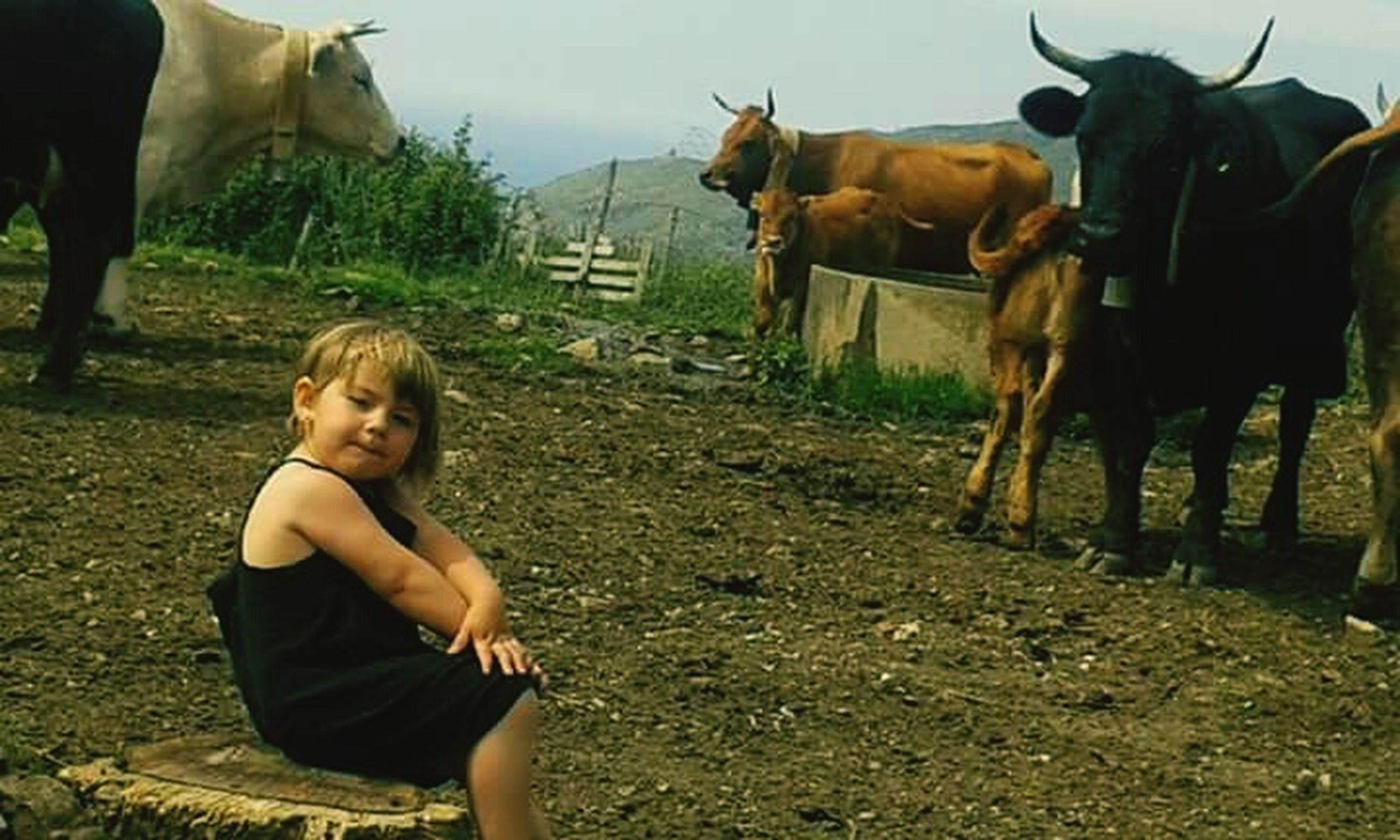 domestic animals, livestock, mammal, animal themes, child, blond hair, horse, childhood, one person, people, outdoors, real people, nature, day, adult