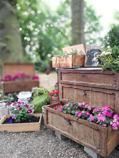 Garden Münster Cafenobis Hippie Greatday Sundayblues Flowerpower Cafelover Garden Photography Garden Flowers Garden Path