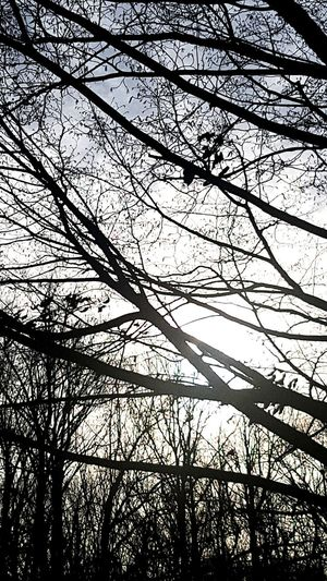 Tree Branch Backgrounds Full Frame Winter Silhouette Close-up Sky