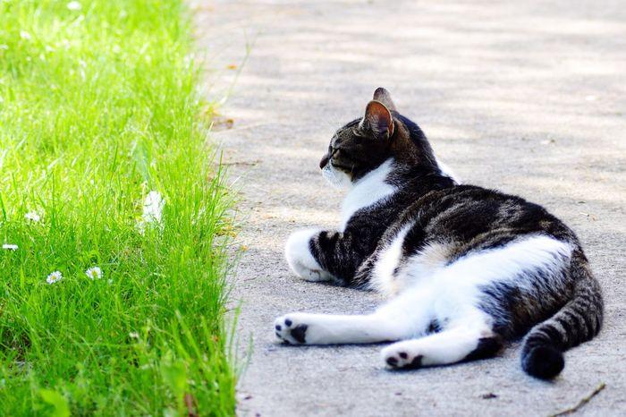Cat Garden