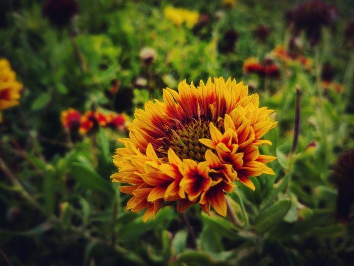 glowing flower