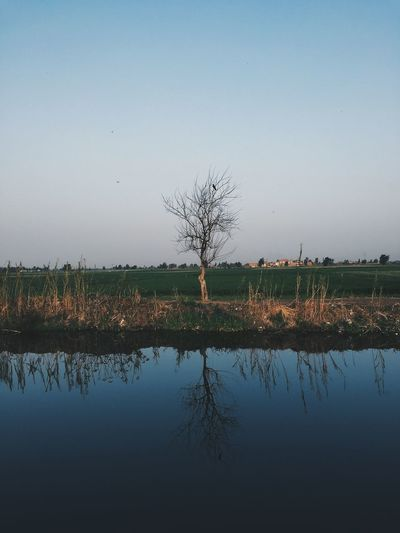 reflection of tree and bird Bare Tree Dailylife Everydayegypt Everydayeverywhere Everydaymiddleeast Gettyimages Instadaily Instagood Instamood Journey Justgoshoot Lake Lensculture Lifeofadventure Nature Photooftheday Reflection Sky Streetphotography Tree Vscocam Vscocamphotos Vscogood Vscophile Water