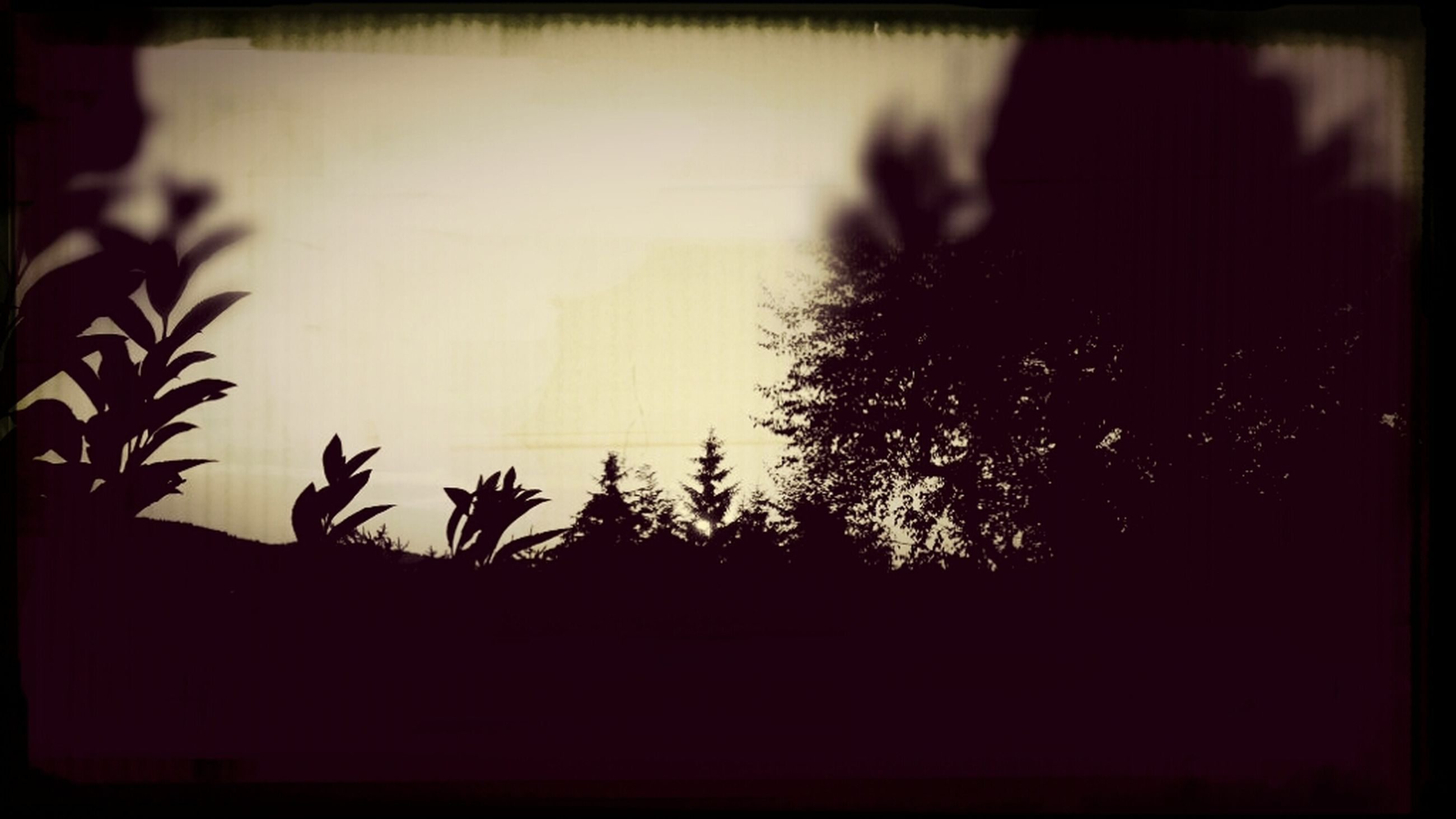 transfer print, silhouette, auto post production filter, dark, sunset, copy space, close-up, indoors, plant, night, no people, nature, dusk, wall - building feature, selective focus, vignette, outline, shadow, focus on foreground
