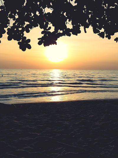 Sonnenuntergang Water Tree Sea Sunset Beach Wave Silhouette Backgrounds Sand Summer Romantic Sky Postcard Coast