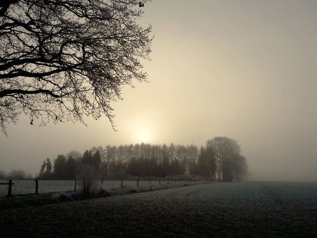 Misty sunrise in the meadows Beauty In Nature Countryside Dawn Day Farmland Fog Mist Misty Morning Morning Sun Nature Outdoors Rural Scene Sky Sunrise Sunset Tranquility Tree Treelines Trees Trees And Sky Treescape Winter