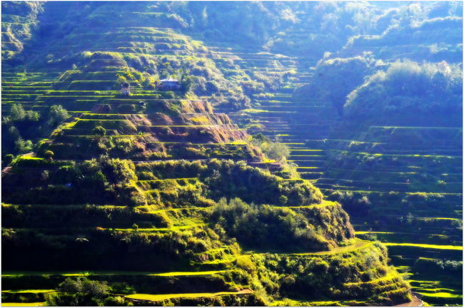 the famous Banaue rice terraces, way back 2013.. Rice Terraces EyeemPhilippines EyeEmNewHere Travel Destinations Travel Tree Forest Rural Scene Mountain Agriculture Landscape The Traveler - 2018 EyeEm Awards