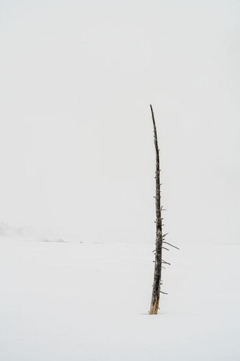 Dead plant against sky during winter