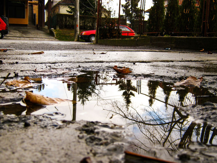Reflection of trees in puddle on street