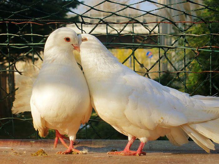 Birds Animal Love