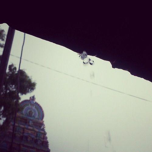 Raindrops Instasalem Tamilnadu feeling Awesome clicked in experia_mini