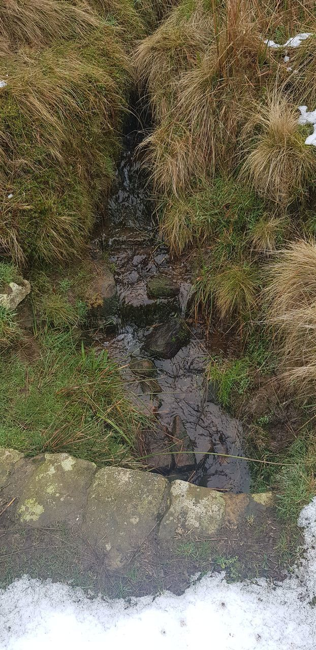 plant, nature, no people, day, grass, growth, land, water, tranquility, downloading, outdoors, high angle view, beauty in nature, field, rock, solid, footpath, puddle, tree, flowing water, flowing