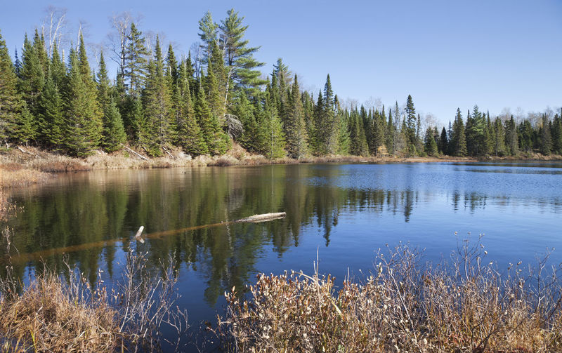 Small trout lake in northern Minnesota with beautiful blue Beauty In Nature Water Forest Lake Blue Sky North Minnesota USA Wilderness Trout Lake Reflection Pine Tree Birch Log Landscape Boreal Woods Superior National Forest Sunlight Outdoors Shoreline Scenics Evergreen Tree No People Photography