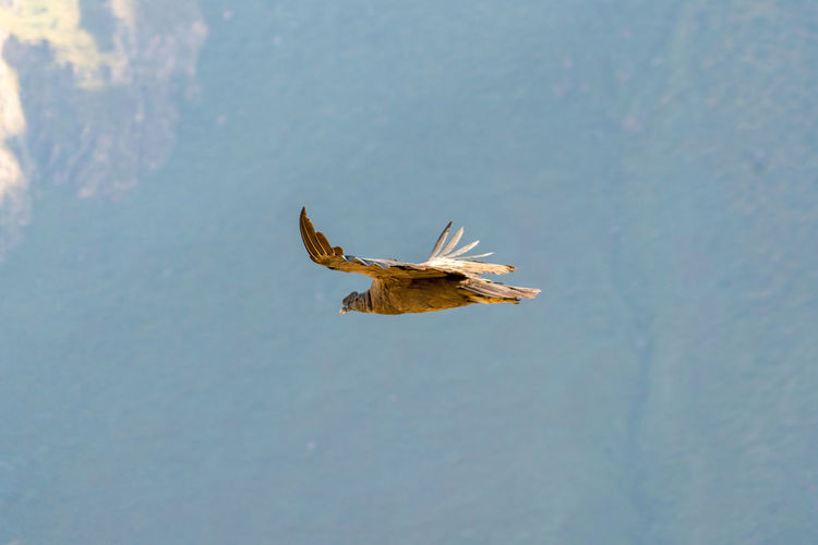 Close-up of eagle flying over water