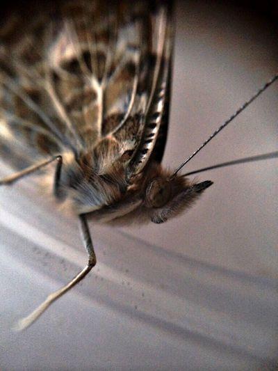 EyeEm Best Edits EyeEm Apple ( butterfly by Iphone5s ?? )