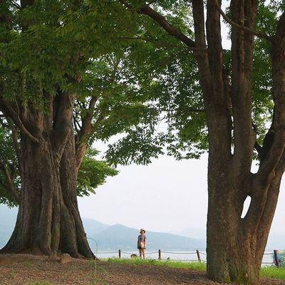 400살 먹은 거대한 느티나무 사이에 선 @by.becky 😚 두물머리 Standing between 400 years old zelkova trees Imagineyourkorea Dumulmeori