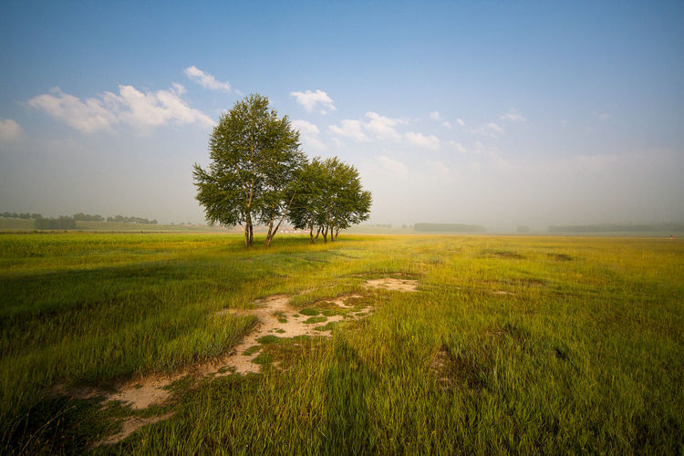 Tree Rural Scene Agriculture Springtime Shadow Field Meadow Rice Paddy Crop  Sky