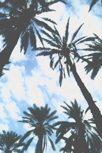 Summer ☀ Lovely Palms & Beach