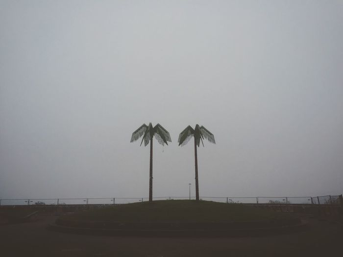 Foggy morning. Cold Weather Outside Grey Color Morning Fake Trees Hamburg Germany Autumn Autumn Melancholy Fog Palm Tree Sky Tropical Climate Tree Plant Nature Copy Space Outdoors