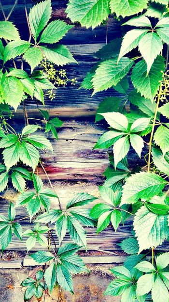 Backgrounds Leaf Full Frame Green Color No People Textured  Growth Plant Close-up Day Nature Huaweip8 Lite The Week On EyeEm Mix Yourself A Good Time Perspectives On Nature