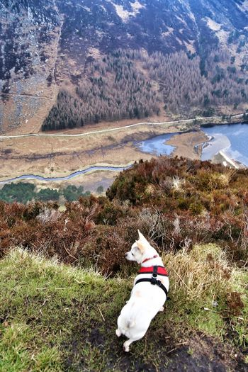 WILBUR checks out the view. The Purist (no Edit, No Filter) The Places I've Been Today Irelandinspires Walk This Way Chihuahua Chihuahuasofinstagram Summer Dogs The Great Outdoors - 2015 EyeEm Awards Nature On Your Doorstep Nature EyeEm Selects