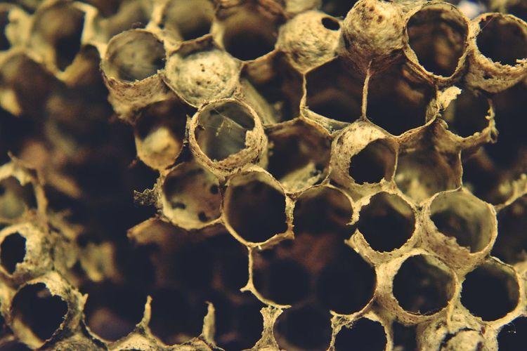 Full frame shot of wasp nest