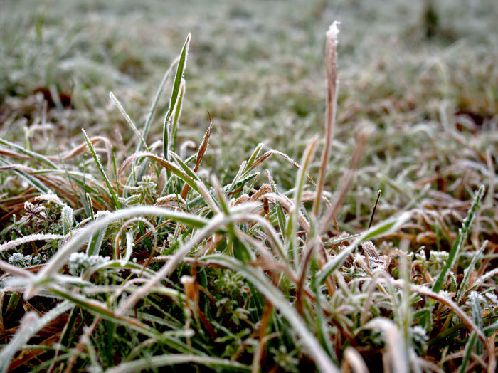 Autumn Colors Beauty In Nature Close-up Day Field Freshness Grass Grass With Ice Green Color Growth Hoar Frost Nature No People Outdoors Plant Selective Focus White Frost