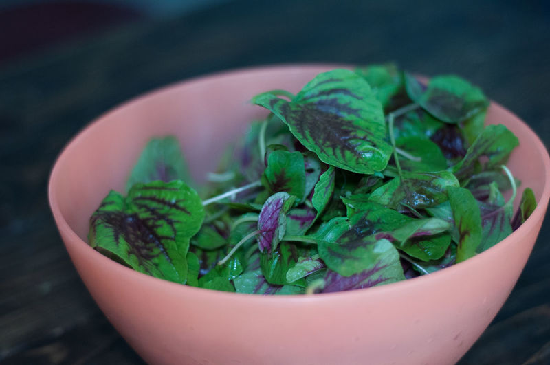 Raw Purple Green Organic Baby Spinach in a Bowl Baby Spinach Raw Raw Food Raw Photography Eat Raw Eat Eating Eating Healthy Eatclean Freshness Fresh Vegetable Vegetables Vegetarian Food Vegetarian Bowl Fresh And Clean Preparation  Cooking Salad Cheflife Homemade Home Cooking