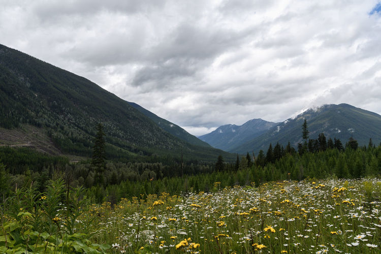 Mountain flowers in Canada Flower Mountain Valley Wilderness Wild Nature Canada British Columbia Flora Evergreen Tree Evergreen Deforestation Cloud - Sky Sky Dramatic Sky Landscape Cloudy Travel Outdoor Hiking Weather Dark Brush Adventure Peaceful