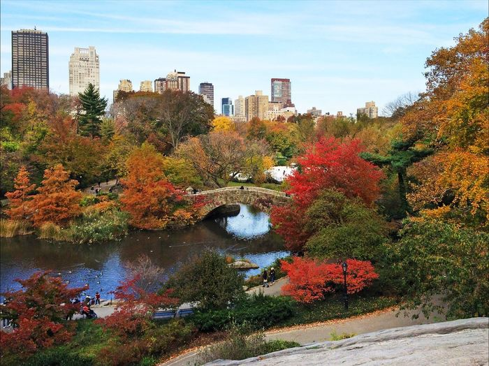 Central Park in New York in autumn New York Central Park Autumn Fall Park City Nature USA America Idyllic Colorful Colors Sightseeing Traveling Travel Cheerful Trees Town Tourists Tourism Lake Plants Green Fall Falling