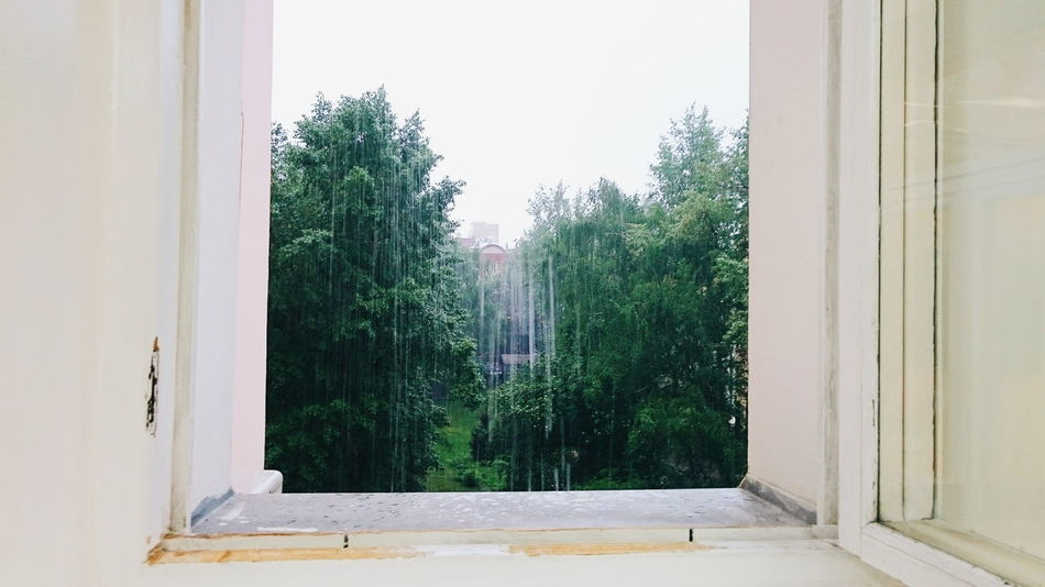 Rain Summer Green Leaves Out Of The Window Nature Natural Beauty The Great Outdoors - 2016 EyeEm Awards The Essence Of Summer- 2016 EyeEm Awards The Street Photographer - 2017 EyeEm Awards The Photojournalist - 2017 EyeEm Awards