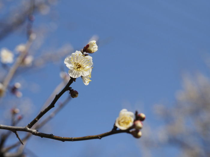 Olympus Singlefocus Standard Lens Nature Photography Nature Naturelover EyeEm Nature Lover Springtime Spring Flowers Spring Is Coming  Flower Beauty In Nature Growth Flower Head Tree Day Sky
