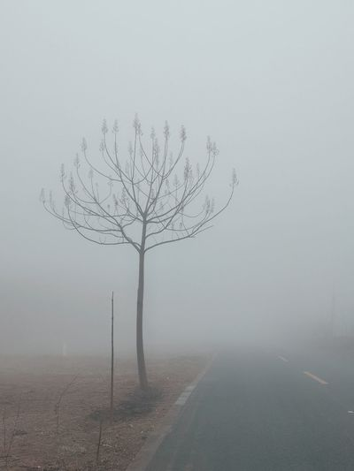Bare tree on road against clear sky