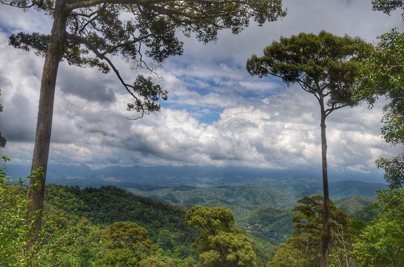 Raming MaeTang Chiangmai Thailand Tea Farm Tree Tree Area Water Forest Rural Scene Blue Tropical Climate Mountain Sky Landscape
