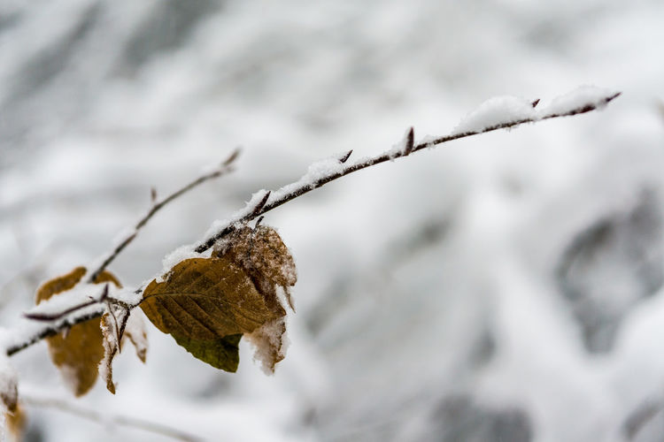Beauty In Nature Bokeh Close-up Cold Temperature Day Frozen Leaf Nature No People Outdoors Snow Weather Winter
