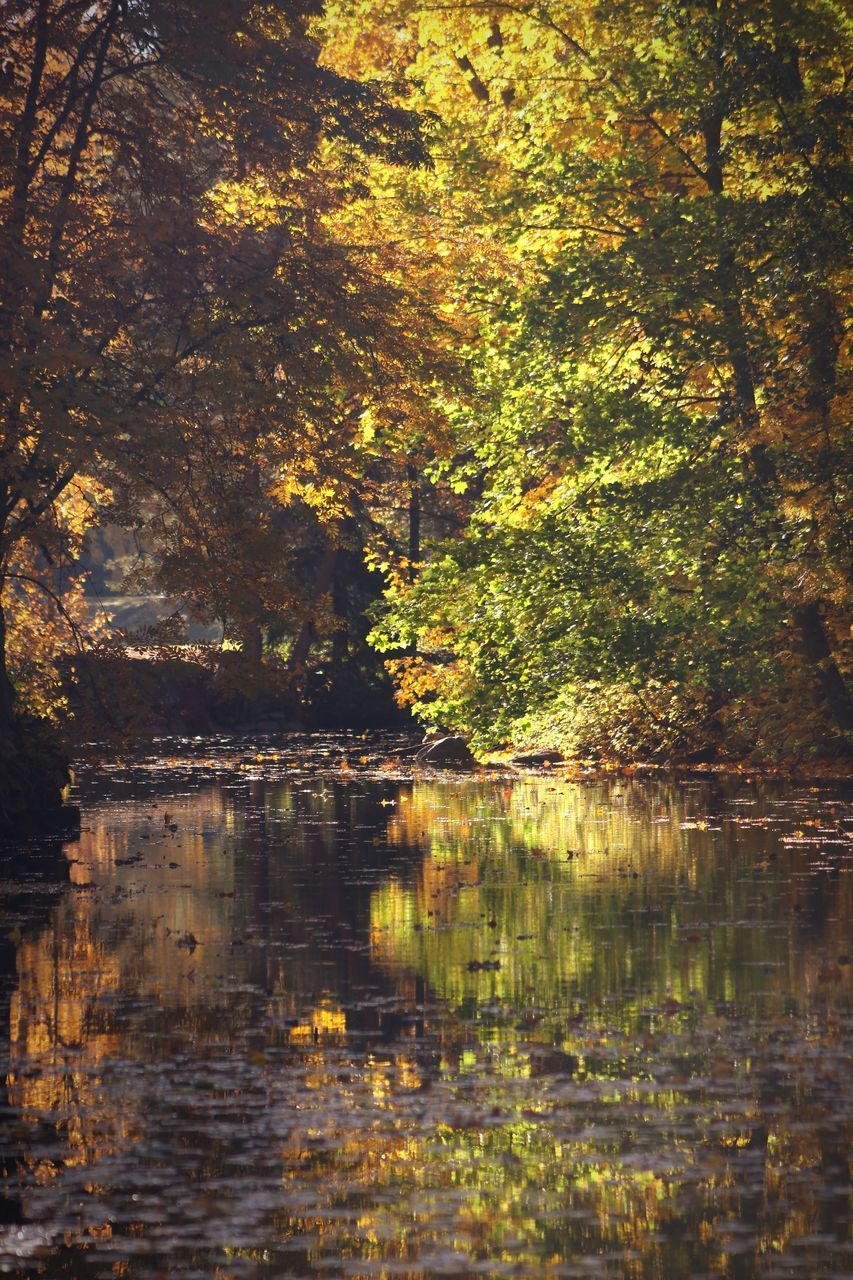 tree, water, reflection, lake, plant, forest, tranquility, nature, beauty in nature, no people, tranquil scene, land, change, autumn, day, scenics - nature, growth, outdoors, waterfront