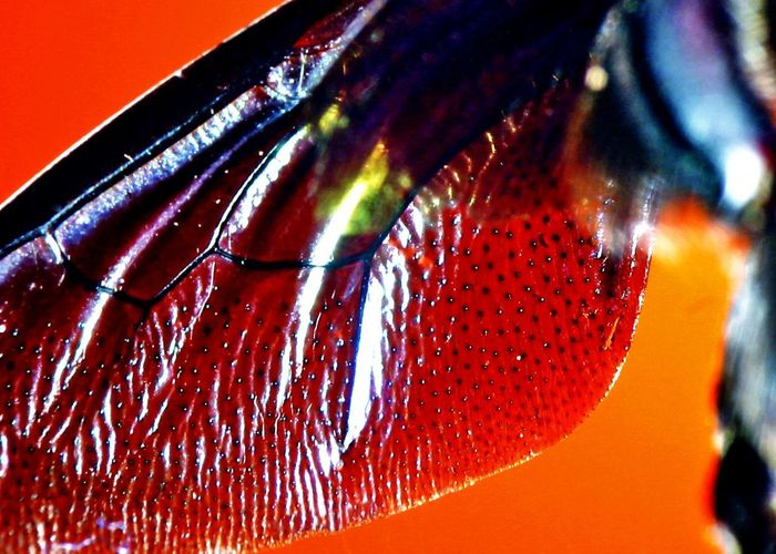 Detail shot of orange leaf