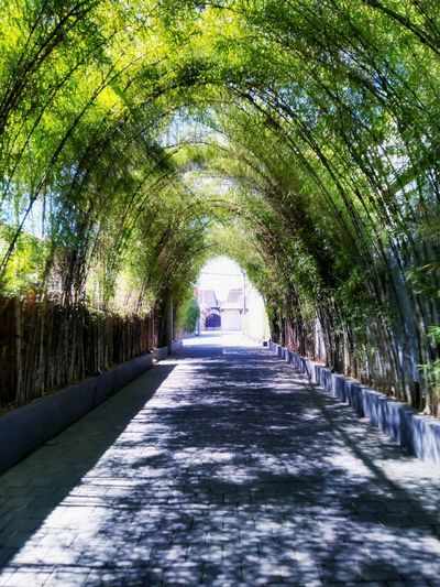 Bamboo tunnel #Bali #Indonesia #bamboo #bambooshadow #bambootree #Balinese #explore #landscape #picoftheday Tree Pathway Walkway Woods Empty Road