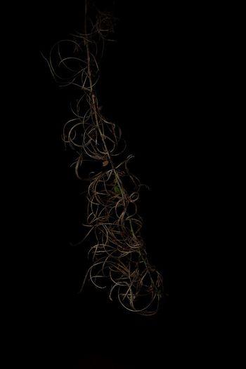 Black Background Love Macro Photography POTD Perspective Romantic Artandvielfalt Black Black And White Black And White Photography Close-up Detail Flower Flowers Fresh Grey Macro Newstyle No People Photography Rose - Flower Roses Rosé Style