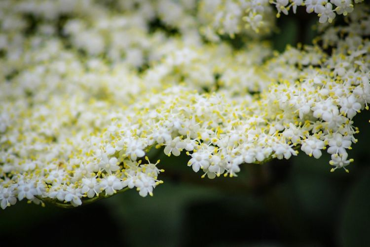 Flower Fragility White Color Nature Freshness Growth Blossom Beauty In Nature No People Focus On Foreground Day Close-up Plant Springtime Blooming Outdoors Flower Head Macro