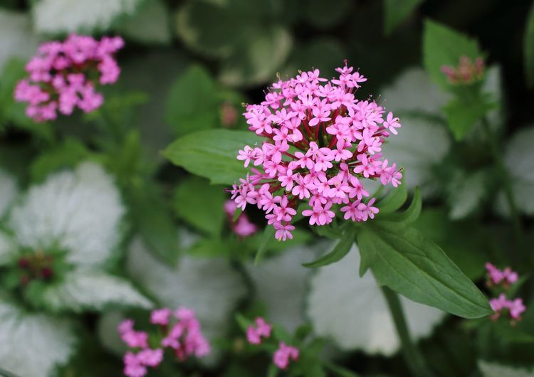 Little flowers Flowering Plant Flower Plant Vulnerability  Fragility Freshness Beauty In Nature Plant Part Pink Color Growth Leaf Close-up Nature Focus On Foreground Petal No People Inflorescence Flower Head Day Outdoors