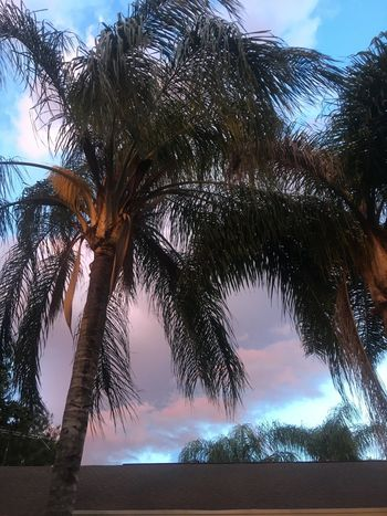 Tree Palm Tree Sky Tree Trunk Cloud - Sky Tranquility Scenics Nature Outdoors Beauty In Nature No People Beach Day EyeEmNewHere The Week On EyeEm Mix Yourself A Good Time EyeEmNewHere