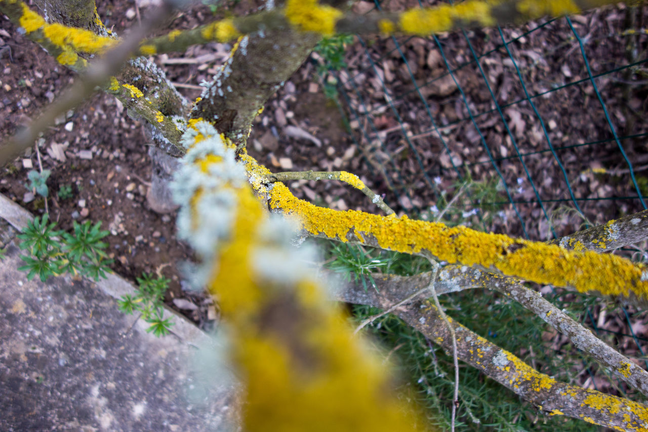 High Angle View Of Lichen Growing On Dry Plant